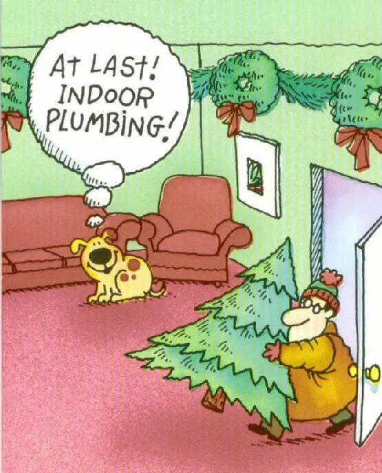 COW Indoor Plumbing